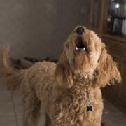 perro vecino ladra abogados zaragoza